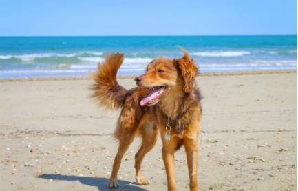 Doubly Delightful Travel Destinations: Five Spots Sure to Please You and Your Pooch
